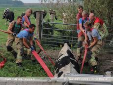 Foto behorende bij Brandweer schiet koe in de sloot te hulp