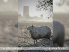 Foto behorende bij Winnaar fotowedstrijd mooiste foto van Goeree-Overflakkee